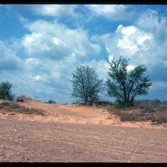 Dunes and sand blow, Blue River State Scientific Area