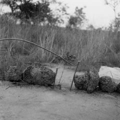 Kuba-Bushong Trap for Edible Rats