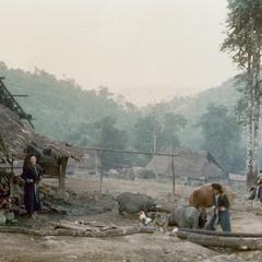 White Hmong woman feeding pigs in Houa Khong Province