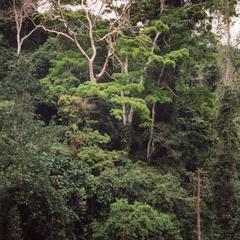 Rainforest greenery