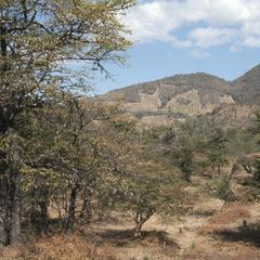 Dry forest north of Chiquimula