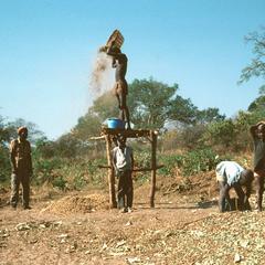 Winnowing Threshed Groundnuts