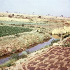 Irrigated Vegetable Crops