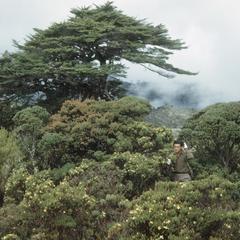 Shrub paramo at Cerro de la Muerte