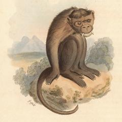 The Chinese Monkey