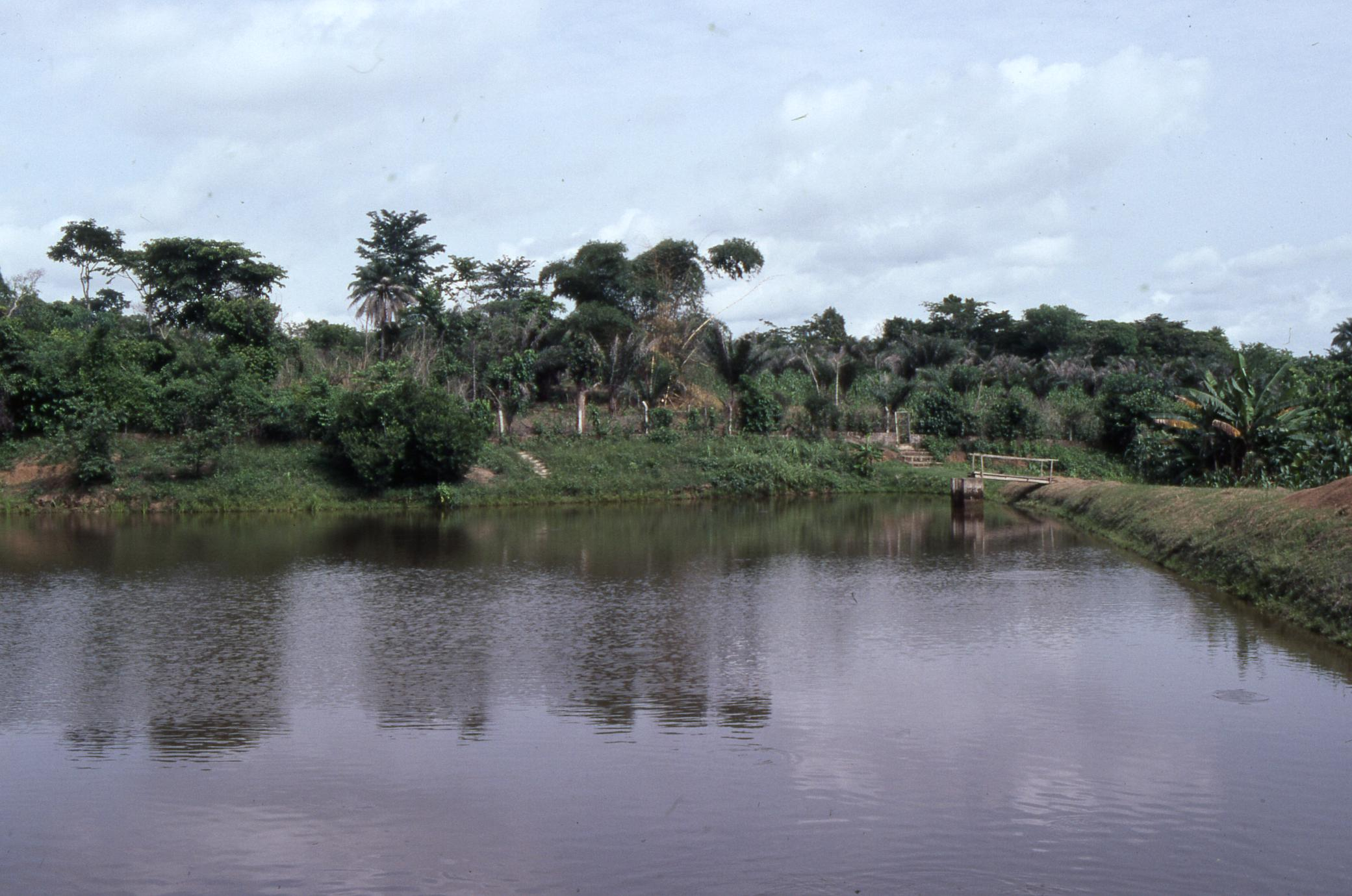 Fishpond on Oba Oladele Olashore's land