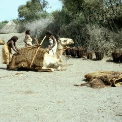Loading Water onto Camels
