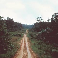 Typical Rural Road through Forest