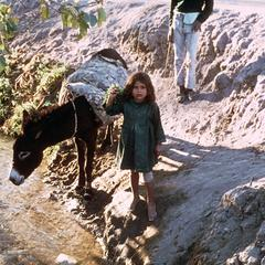 Girl Guiding Donkey Across a Stream