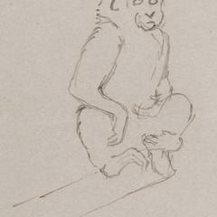 Seated Macaque Print