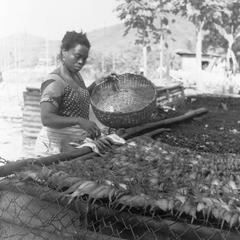 Woman Drying Fish
