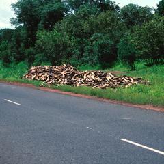 Pile of Firewood Along the Sepu-Banjul Highway