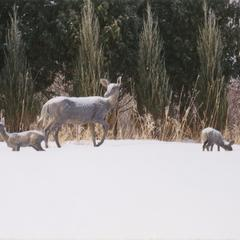 """""""Doe with Fawns"""" sculpture"""