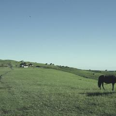 South Africa : scenery : horses grazing
