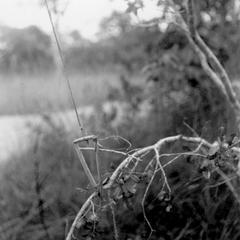 Kuba-Bushong Trap for Birds