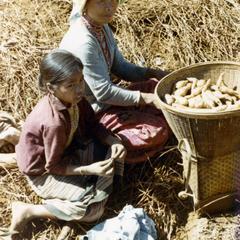Nyaheun mother and daughter gather taro root in Attapu Province