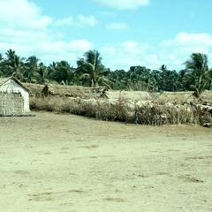 Housing for Workers on Banana and Palm Plantation