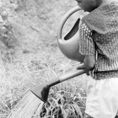 Boy Watering crops at Mr Dauda's Experimental Farm