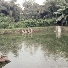 Fishpond surrounded by vegetation
