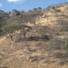 Thorn savanna, valley of Río Motdyera