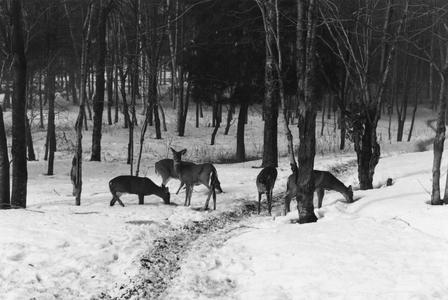 Winter deer feeding