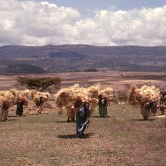 Women Carrying Straw From the Harvest