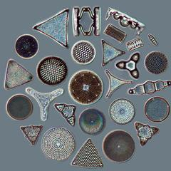 Diatoms arranged in a work of art