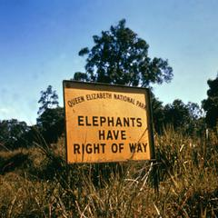 Elephants Have the Right of Way Sign in Queliz Park
