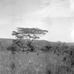Savannah in Early Dry Season Near the Kuba-Bushong Capital of Nsheng