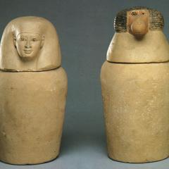 Egyptian Hamadryas
