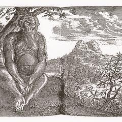 Bushman or Man in the Woods