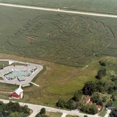 Aerial view of corn maze in shape of a phoenix