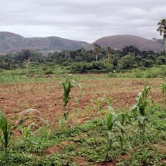 Farm in Ondo Nigeria