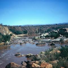 Gray Rocks and Hippopotamus in Komat River