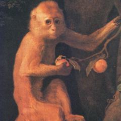 Seated Capuchin Print
