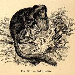 Saki Satan