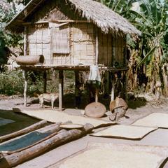 Drying rice in the Khmu' village of Phou Luang Nyai in Houa Khong Province