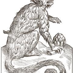 Cercopithecus