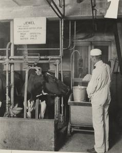 Weighing feed