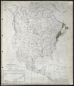Betula papyrifera cordifolia (Regel) Fernald - paper birch