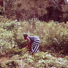 Woman Clearing Field for Farming