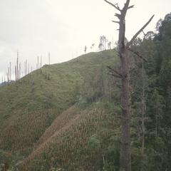 Corn fields and cutover cloud forest, near Jama