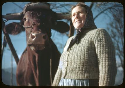 Closer shot of a woman with an ox