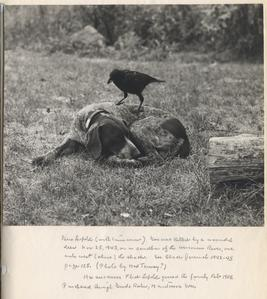 "Eulogy for ""Gus"" (photo of dog with tame crow and caption written by AL), late 1943-early 1944"