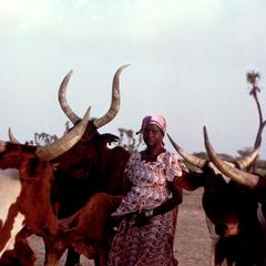 Hausa Woman Taking Baskets of Chaff and Bran to Her Zebu Cattle