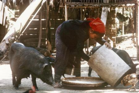 A Khmu' woman gathers pounded rice in a Khmu' village in Houa Khong Province