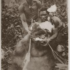 Poached Gorilla Print