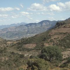 Hills, supposedly with teosinte, near El Rincon