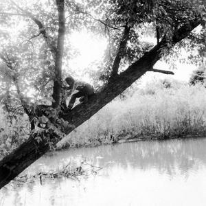 """Estella Leopold and dog in tree on """"Estella's Island"""" near slough"""