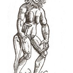 Anthropoid Ape.